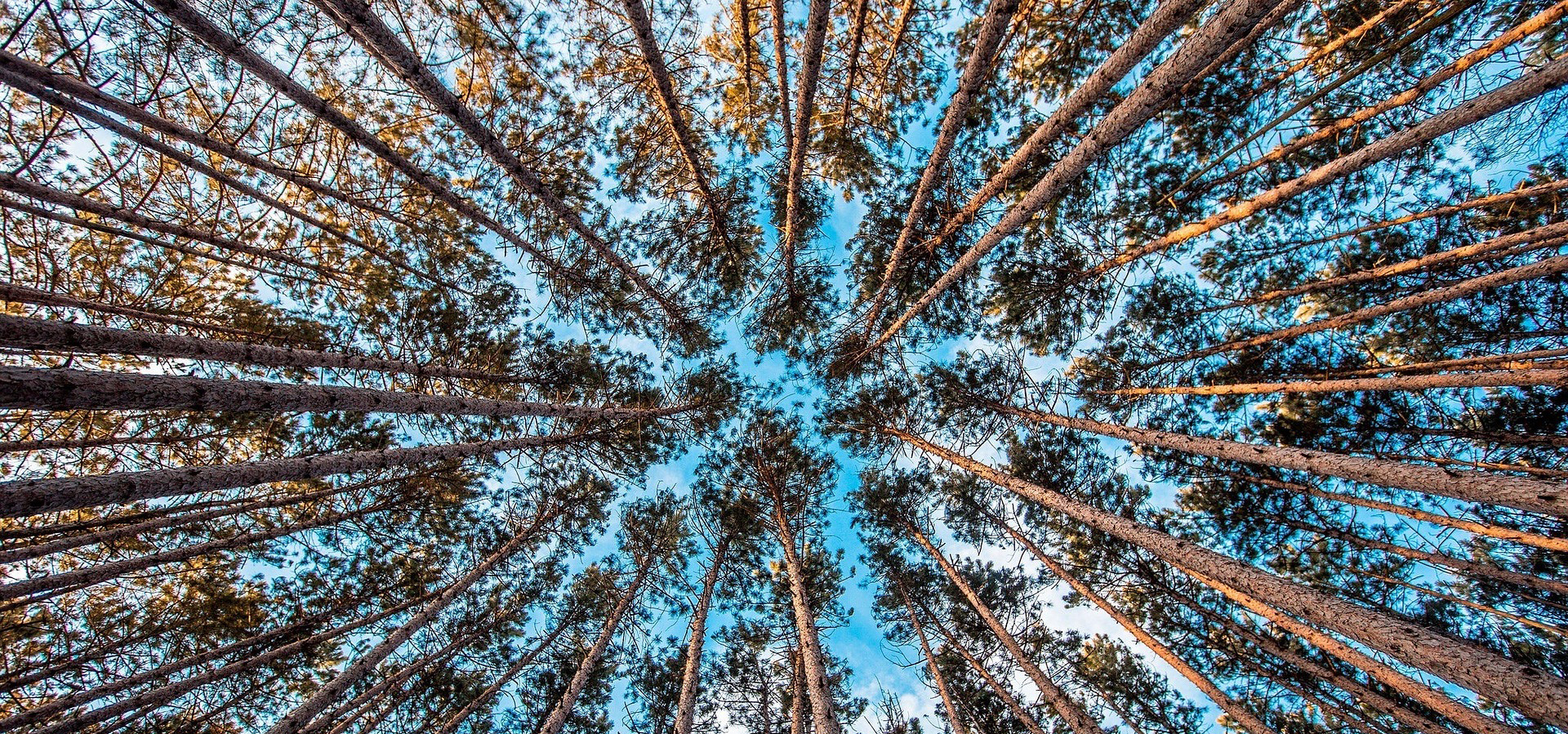 SUMAMOS TRES NUEVOS COMPROMISOS DESDE CASTILLA Y LEÓN, Y ALCANZAMOS LA CIFRA DE 20 ORGANIZACIONES ADSCRITAS A LIFE FOREST CO2
