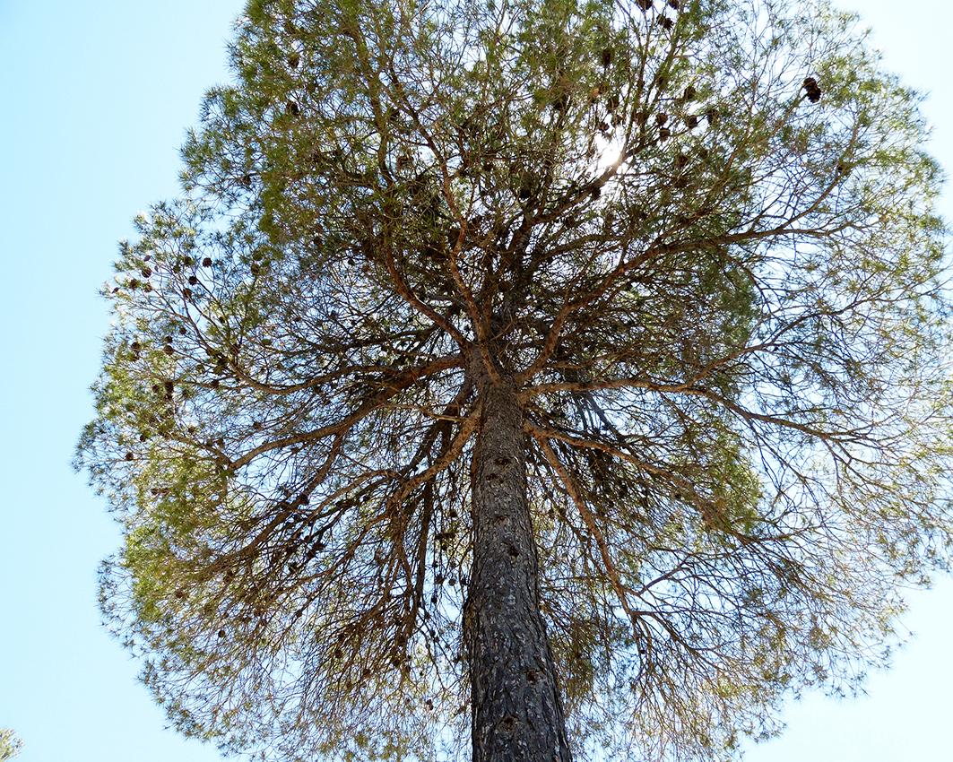 CALIDAD PASCUAL, NUEVA EMPRESA COLABORADORA DEL PROYECTO LIFE FOREST CO2