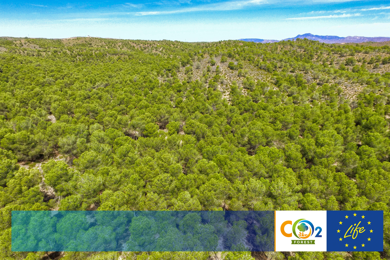 EL PROYECTO LIFE FOREST CO2 AMPLIA SU CAMINO HASTA JUNIO DE 2021