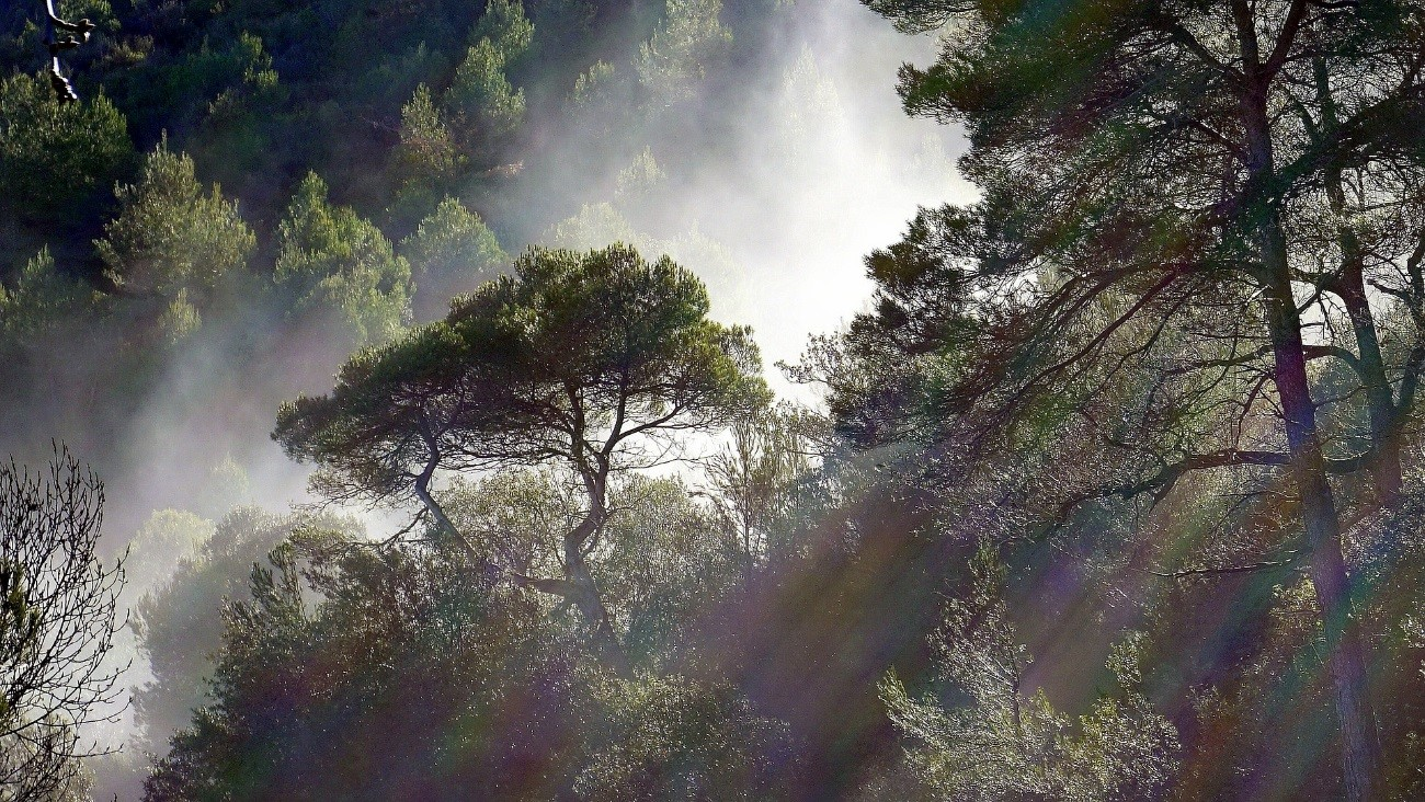 THE PORTUGUESE GOVERNMENT WILL PAY UP TO 150 EUROS PER YEAR AND PER HECTARES TO THE OWNERS OF FORESTS THAT HAVE SPECIES THAT CAPTURE CARBON
