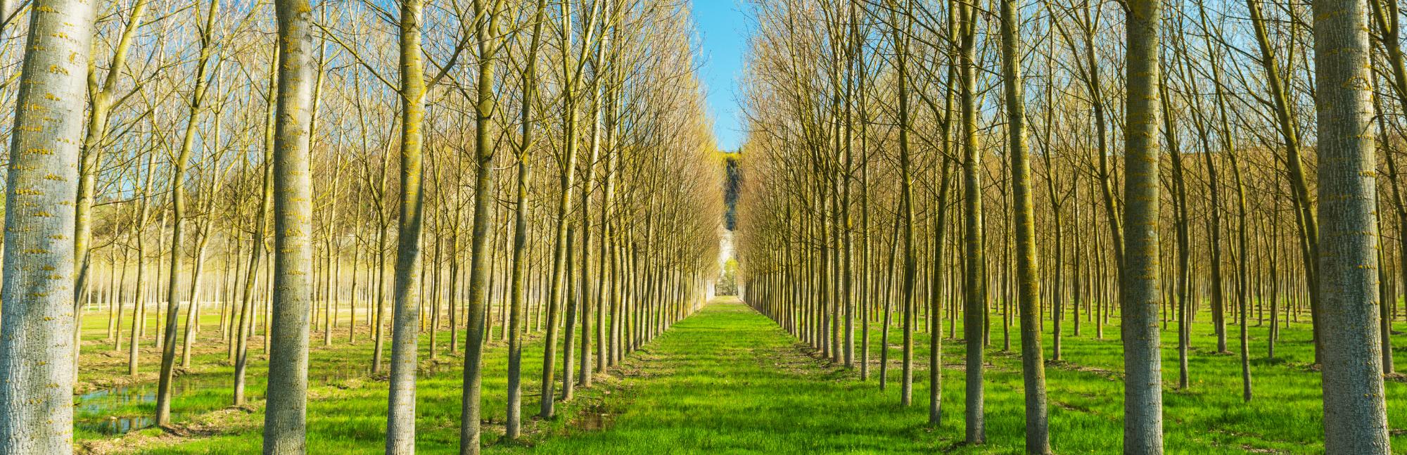 LIFE FOREST CO2 TRANSFERIRÁ SU METODOLOGÍA AL PROYECTO LIFE WOOD FOR FUTURE